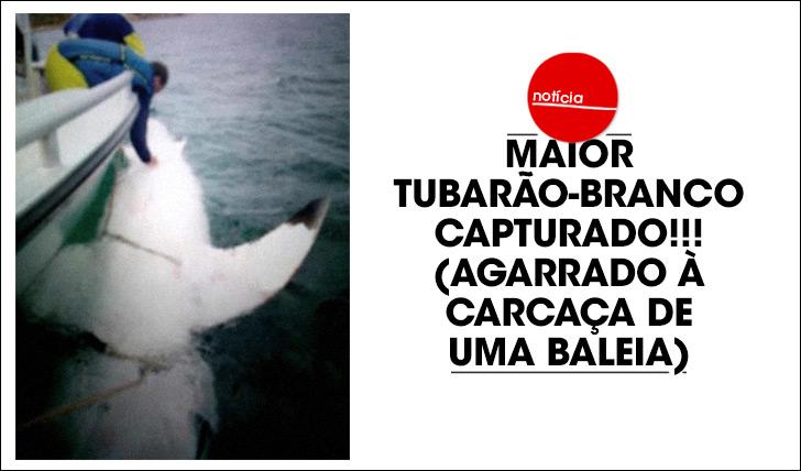 17225Tubarão-branco gigante capturado!!!