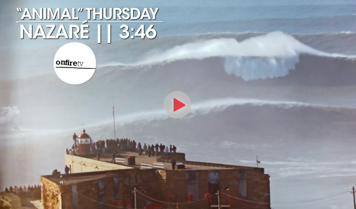 "22222""Animal"" Thursday 
