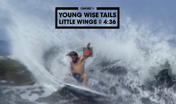 28743Young Wise Tails | Little Wings || 4:36