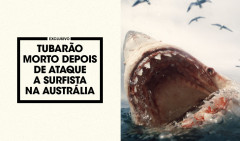 TUBARAO-MORTO-NA-AUSTRALIA