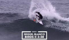 MIGUEL-BLANCO-BIRDS