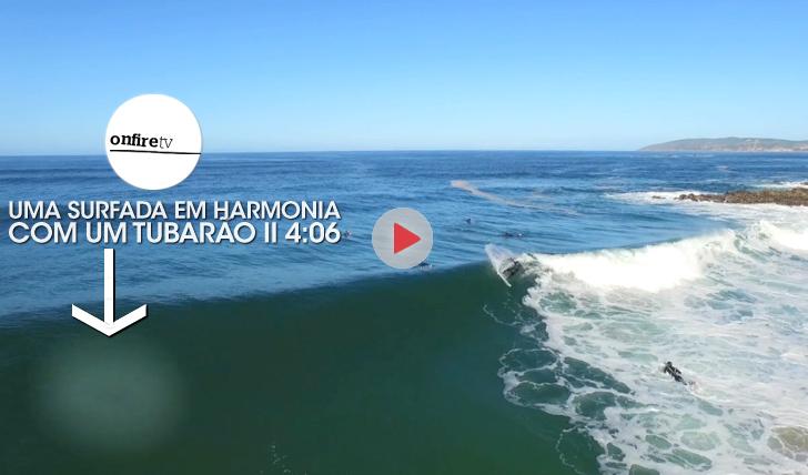 25400Uma surfada em harmonia com um tubarão || 4:06