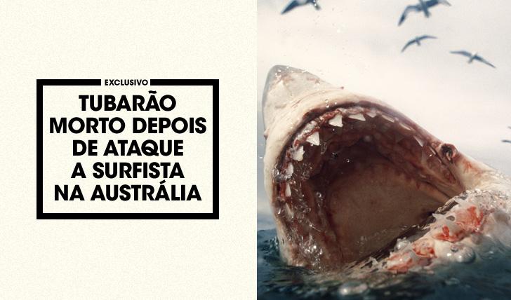 31749Tubarão morto depois de ataque grave a surfista na Austrália